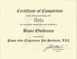 Ayla's basic obedience 1 certificate