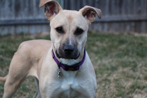 Tina Tanner is looking for her forever home