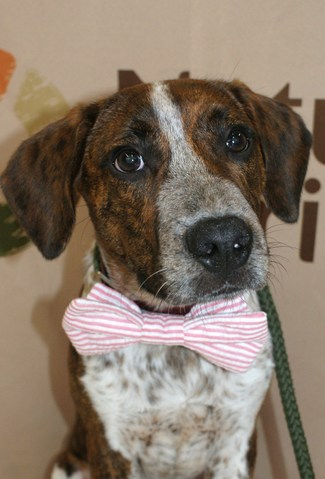 Dapper is looking for his forever home