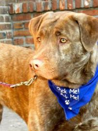 Dallas is Looking for His Forever Home
