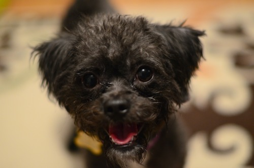 Tammi is looking for her forever home