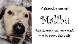 Malibu ad