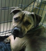 Sahara is looking for her foreer home