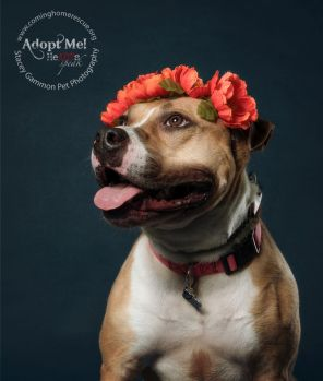 Ayla is Looking for Her Forever Home