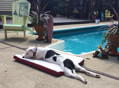 Malibu poolside bed