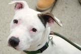 Charo is looking for her forever home