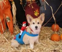CHR Halloween dog
