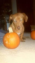 Harry pumpkin