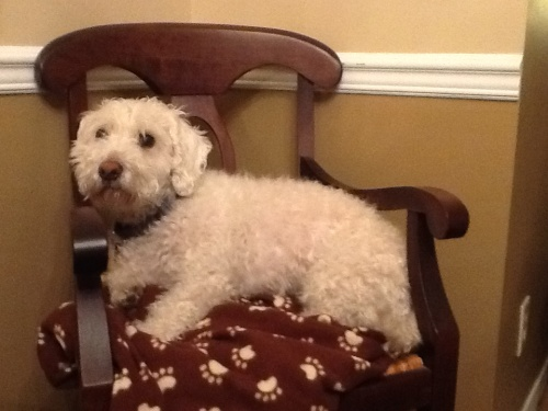 Lamont on chair