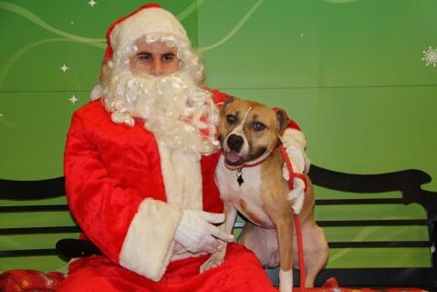 Ayla with Santa