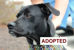 Newton was adopted!