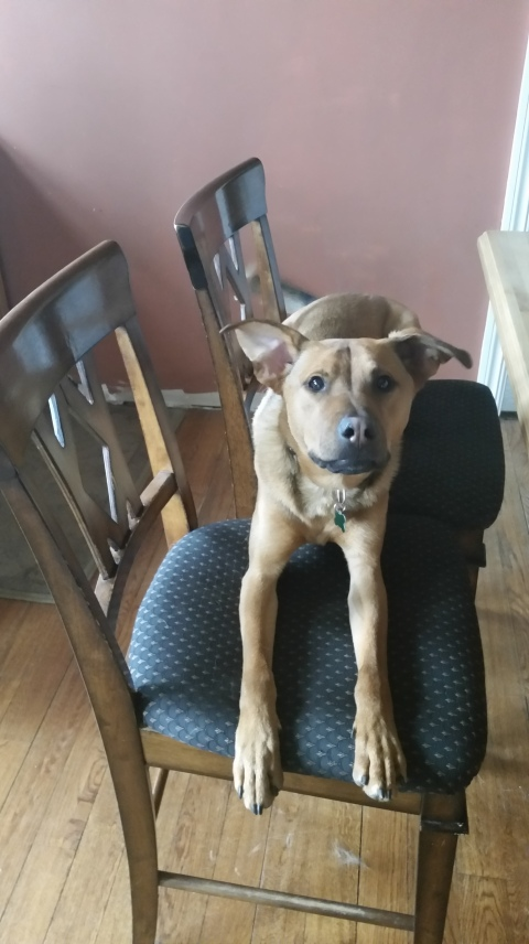Trapper in chair
