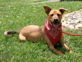Trapper is looking for his forever family