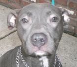 Diamond is looking for her forever home