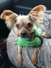 Einstein is looking for his forever home