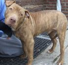 Java is looking for his forever home