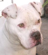 Snow is looking for her forever home