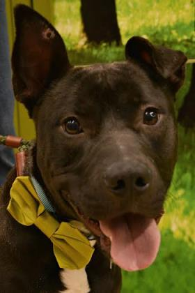 Blake is looking for his forever home