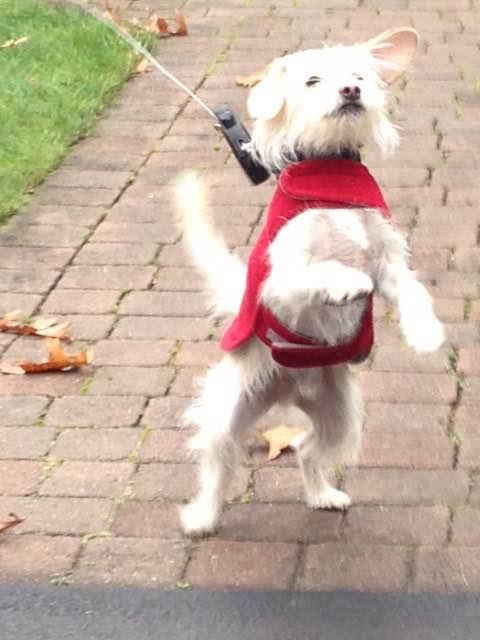 Jasper walk