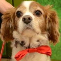 Rex is looking for his forever home with his brother Chancey