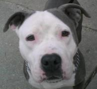 Wiggles is looking for her forever home