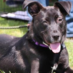 Haddie is looking for her forever home