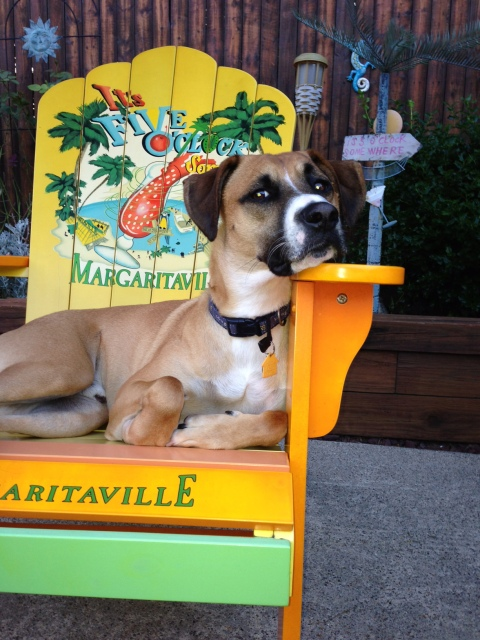 Ka$h Margaritaville chair