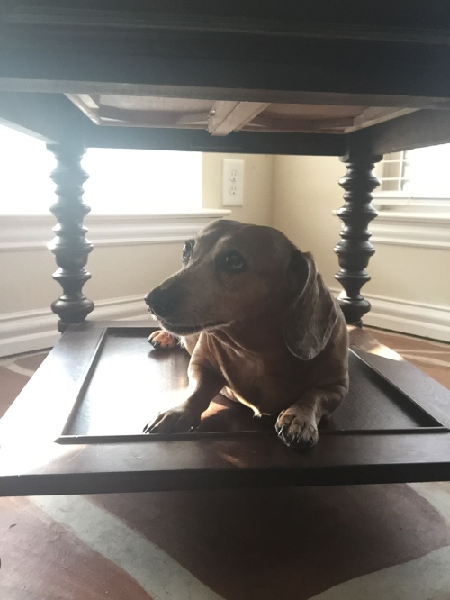 under the table