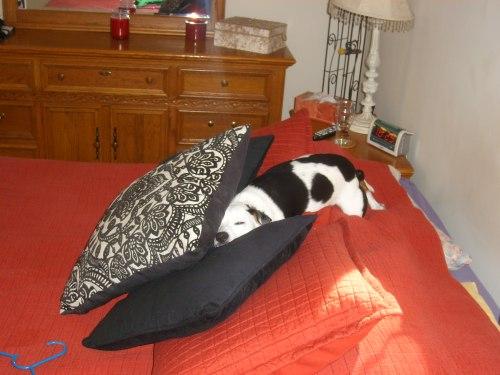 Zippy in bed 1