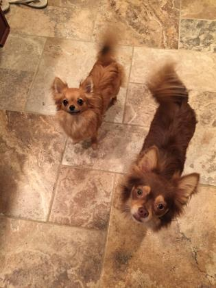 Zoey and Bentley